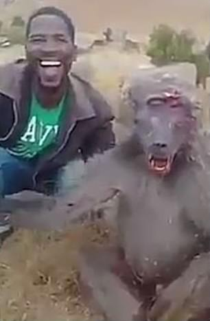 'Does it hurt?': Reward offered to catch 'hunter' filmed taunting an injured baboon and telling it to 'stop complaining' as it gasps for air and bleeds in South Africa