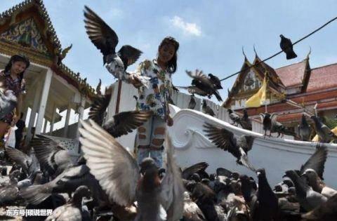 泰国鸽子泛滥成灾 政府悬赏10铢全民补鸽烹饪美食