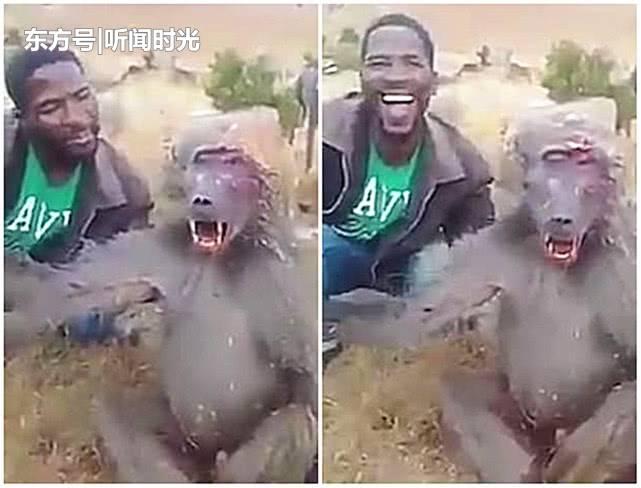 """非洲男子嘲弄重伤狒狒惹众怒,疯狂大笑命令其""""停止抱怨"""""""