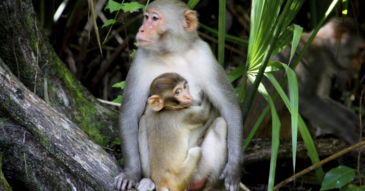 Wild monkeys are taking over this Florida state park