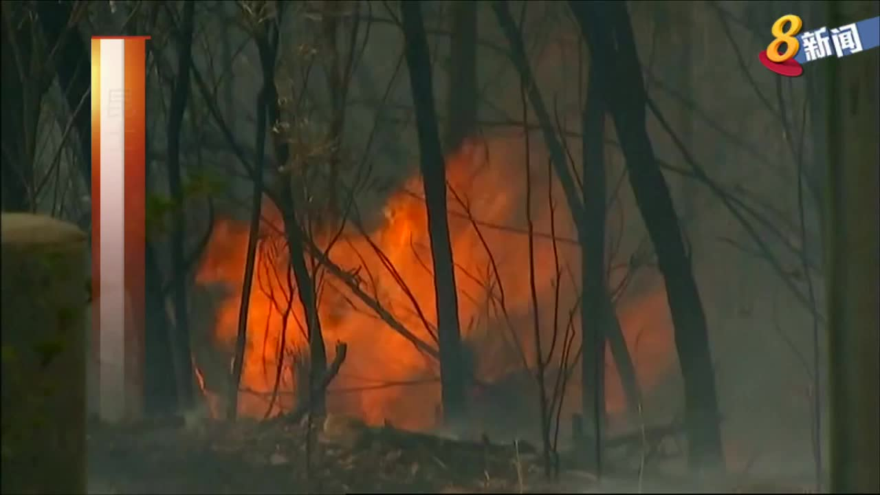 澳大利亚昆士兰州林火肆虐 超过1万1500公顷丛林遭烧毁