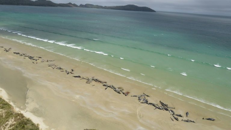 New Zealand rescuers save six stranded whales
