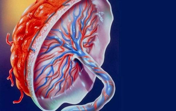 科学家培育出宫外发育胎盘:有望防止流产和死产