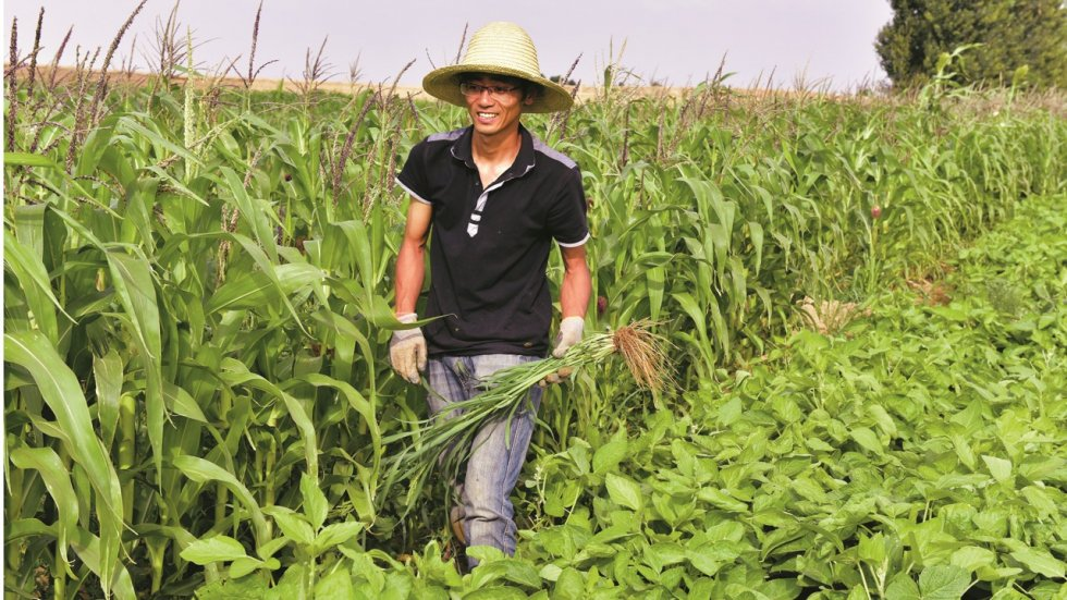 Chinese PhDs and MBAs give up city life for farming, driven by desire to improve agriculture and livelihoods