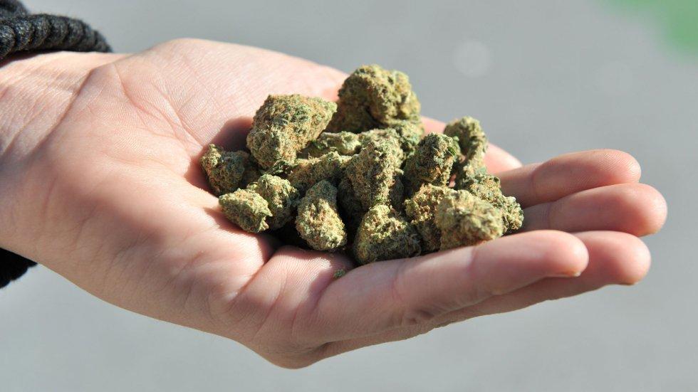 New Zealand to vote on legalising marijuana in 'reeferendum' scheduled for 2020