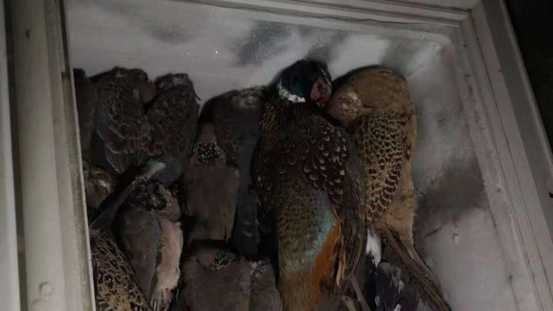 Chinese woman arrested for poaching 'had 400 frozen birds in her house'