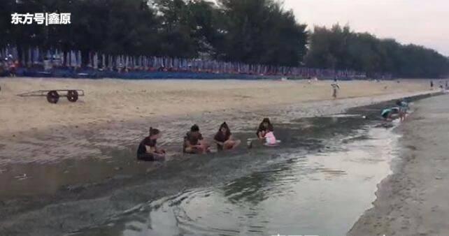 罕见!泰国海滩上百万颗扇贝被冲上岸,场面壮观引人观注!