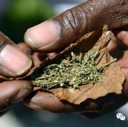 亚洲首例!泰国通过药用大麻使用合法化草案