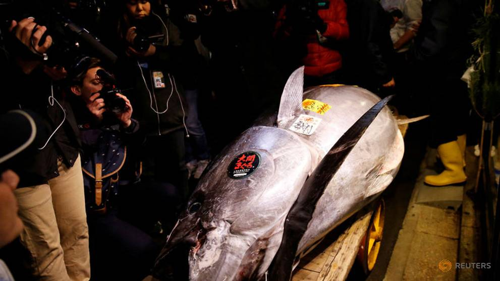 Tuna sells for record US$3 million in auction at Tokyo's new fish market