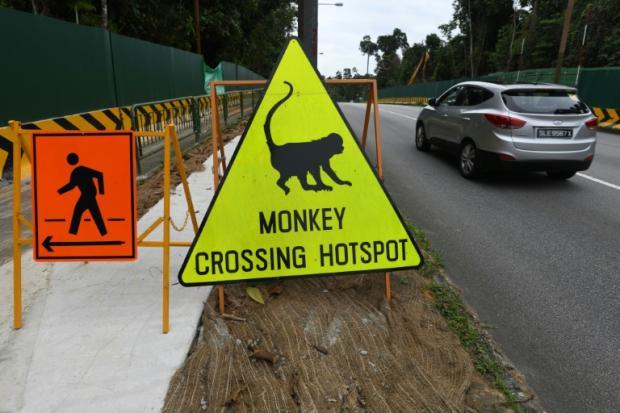新加坡辟生态旅游区遭环保人士批本末倒置
