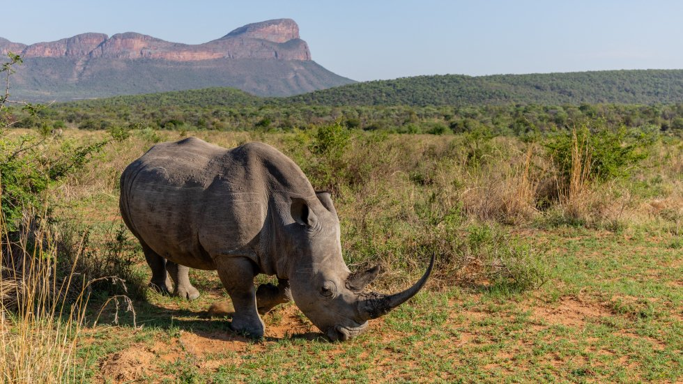 Saving rhinos: the African ultramarathon welcoming Chinese runners to help stop the slaughter