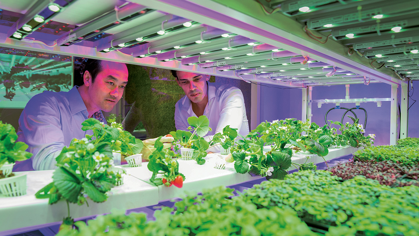 Sustenir Breaks New Agricultural Grounds Growing Strawberries and Kale in Singapore