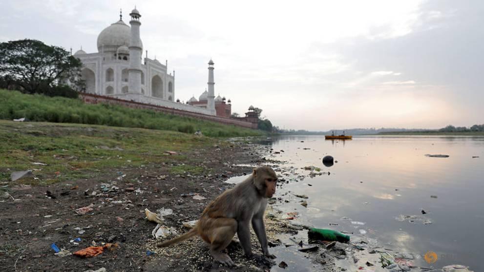 Taj Mahal police take aim at marauding monkeys with slingshots