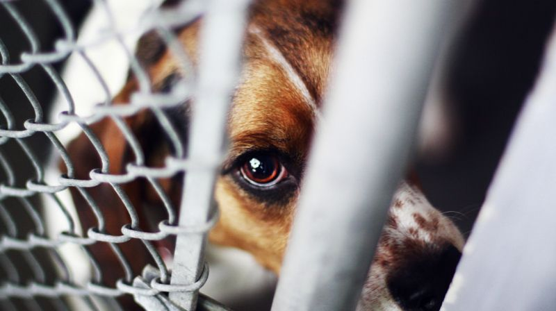 Lawmakers introduce bill to make extreme animal cruelty a federal felony