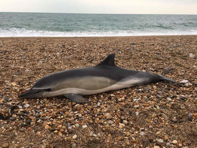 New study finds plastic in 50 dead whales, dolphins, seals