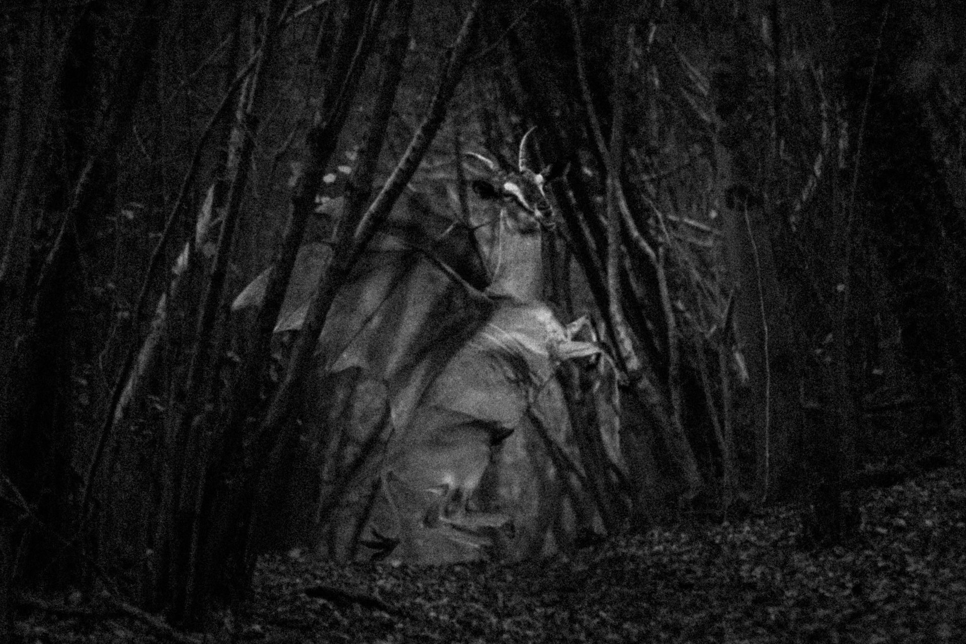 13 Creepy Facts About The JerseyDevil