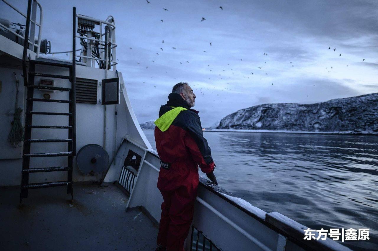 全球暖化危机加剧,北极圈杀人鲸食物减少,被迫持续向北迁移!