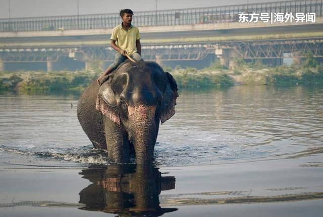 印度新德里街道河流污染严重,已完全不适合大象生存