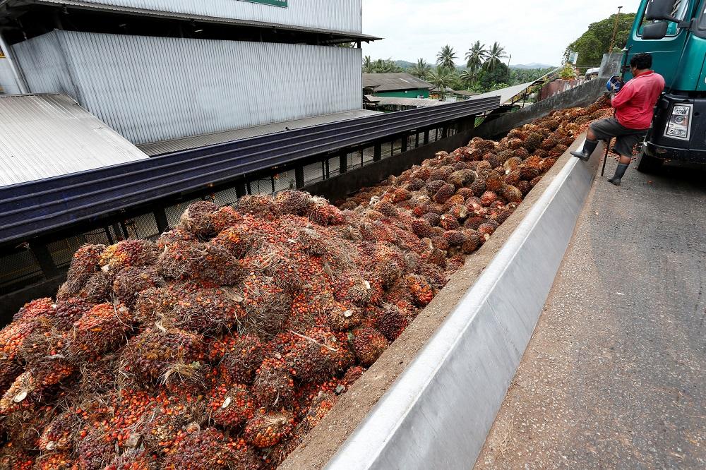 Oil palm price higher under Pakatan govt, says Johor MB