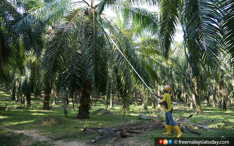 Indian buyers slash Malaysian palm oil orders, say traders