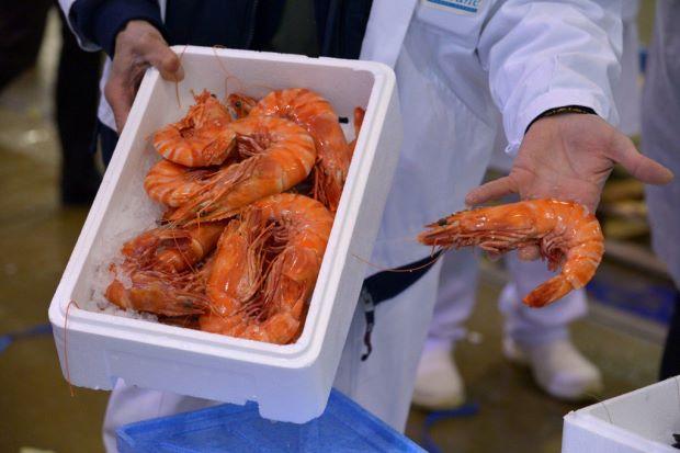 Cocaine, ketamine found in UK shrimp