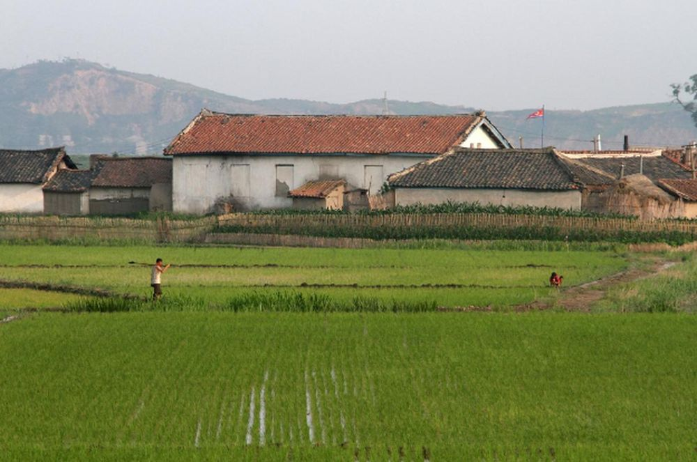 North Korea cuts rations to record low after bad harvest, UN says