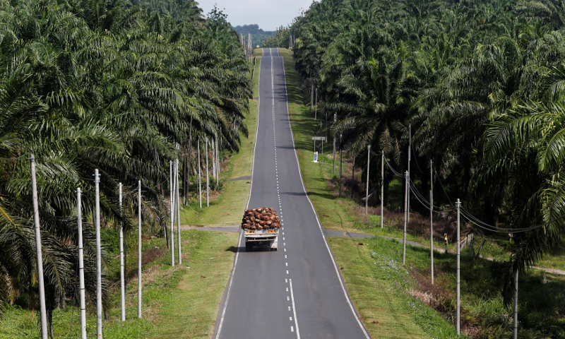 India's trade body unaware if Malaysia's palm oil cargo held up at ports
