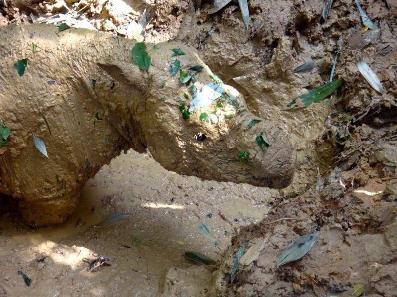 Goodbye Iman, Malaysia's last Sumatran rhino