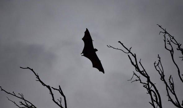 Nipah virus precautions: Kerala on ALERT as man infected - where has Nipah virus SPREAD?