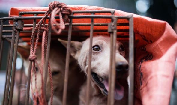Dog Meat Festival: Fury ahead of sick event where dogs are tortured 'to make meat tastier'