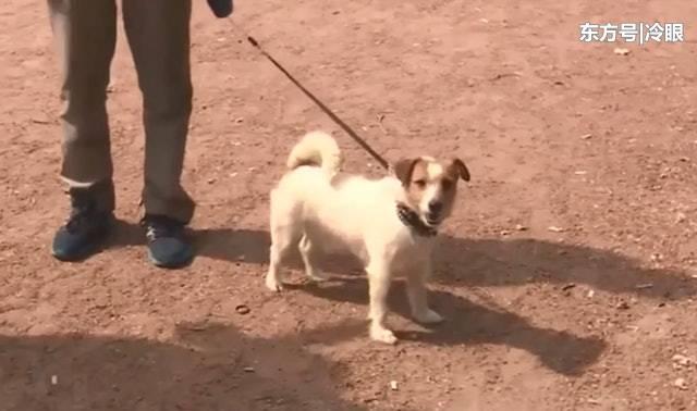 公园散步强拉主人进草丛,聪明狗狗发现初生弃婴救回一命