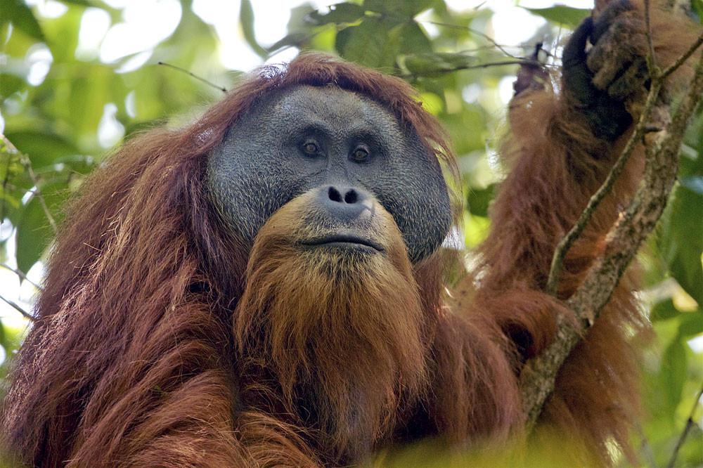 New biodiversity index to provide comprehensive data on Indonesia's animal, plant species