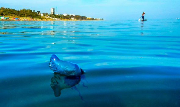 Spain holiday warning: Man O'War jellyfish seen in Marbella after Benidorm beaches closed