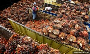 Indian buyers slash M'sian palm oil purchases fearing duty hike - traders