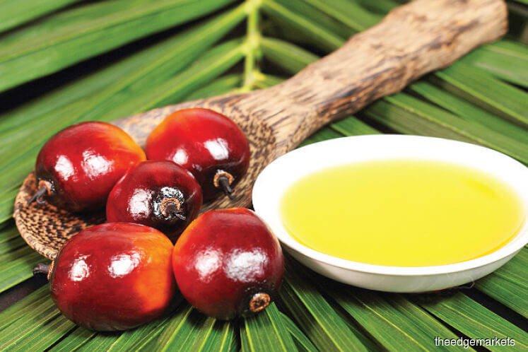 Malaysia Sept palm stocks set to snap six months of falls — survey