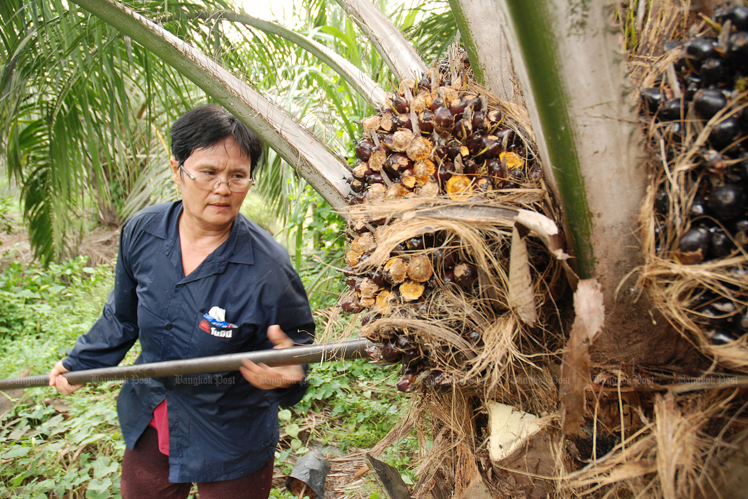 Further oil palm price support measures in store