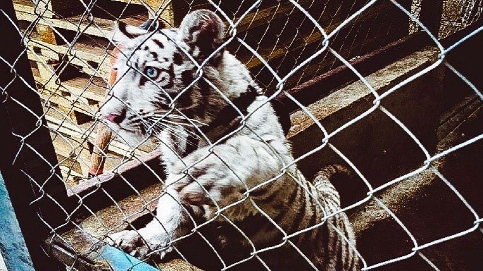 The world's largest-ever wildlife trafficking bust saves thousands of animals