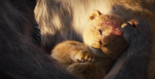 《狮子王》成年度面瘫巨制,但真有那么差吗?