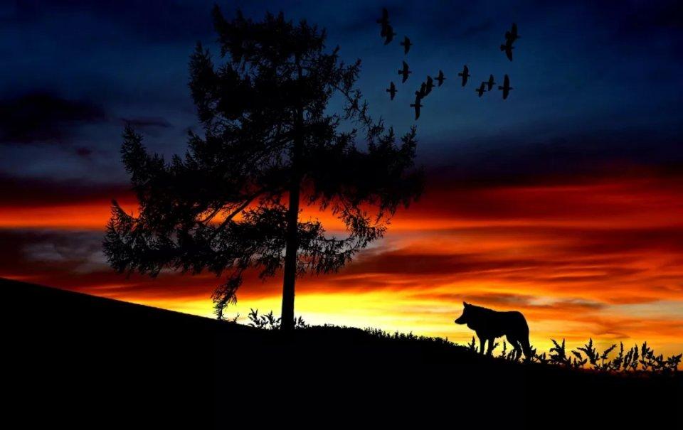有些人比狼还可怕!
