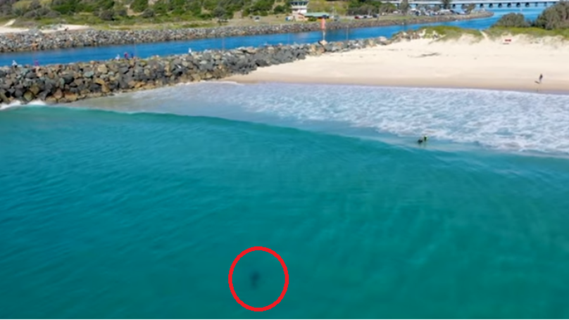 Drone Captures Great White Shark Swimming Just Metres Away From Kids
