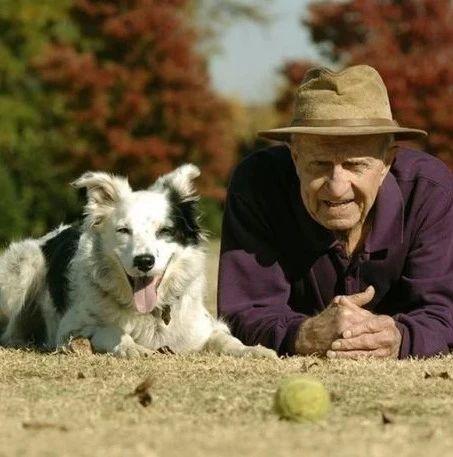 认识1022个单词,世界上最聪明的狗狗去世,它终于和主人重逢了!