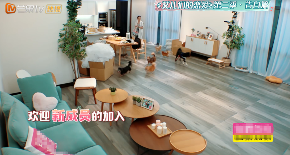 向佐和郭碧婷的婚房首次公开,看到房子的样子,网友:梦中才有吧