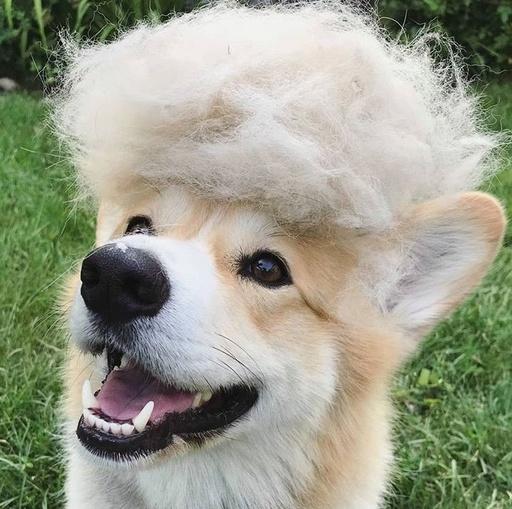 掉毛季来袭,准备好花最少的钱薅最多的狗毛了吗!