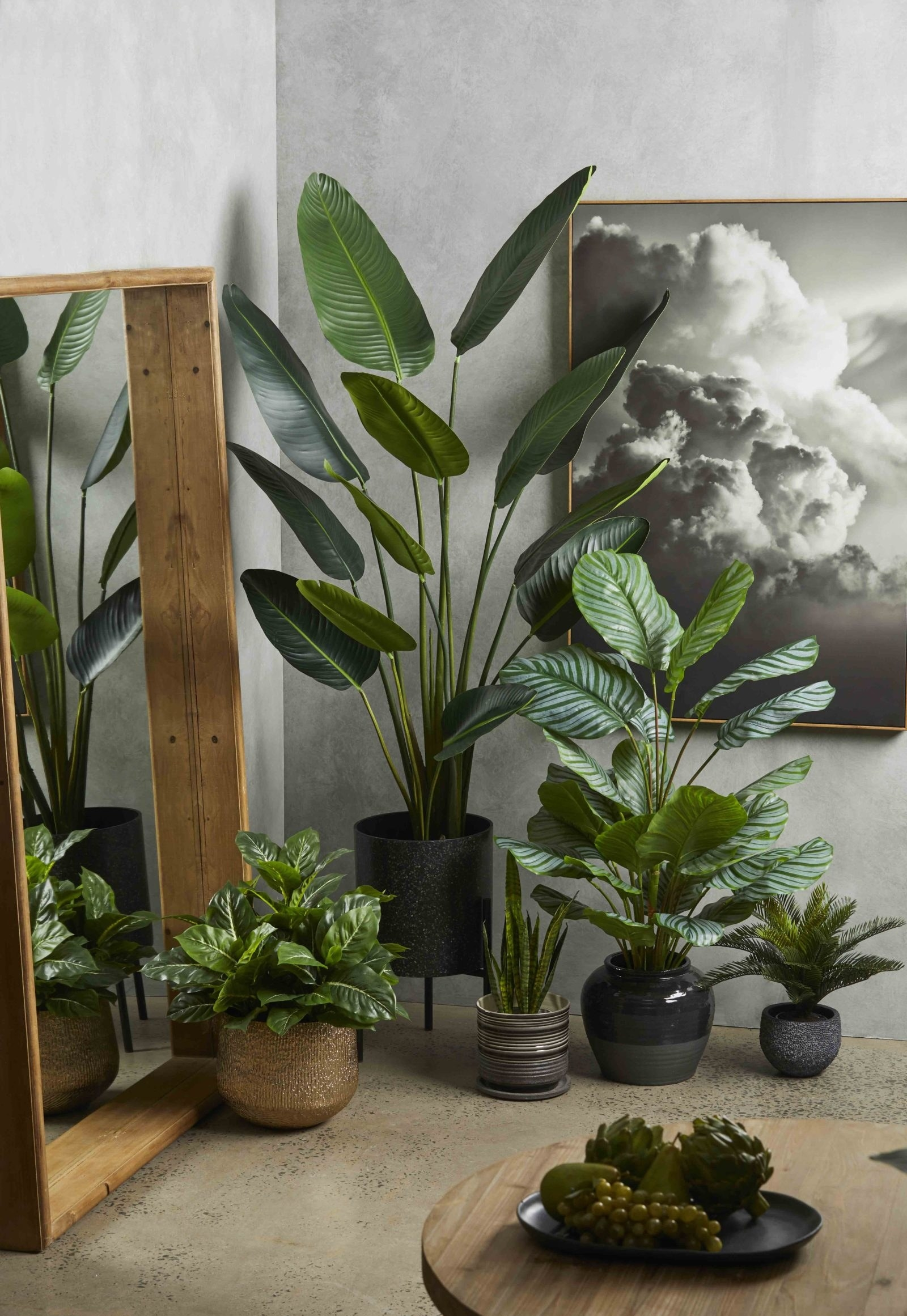 13 Plant Buys You Can Totally Justify Now That Our Lord And Saviour Springtime Is Coming