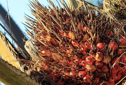 Indian edible oil industry has issued advisory to avoid import of palm oil from Malaysia