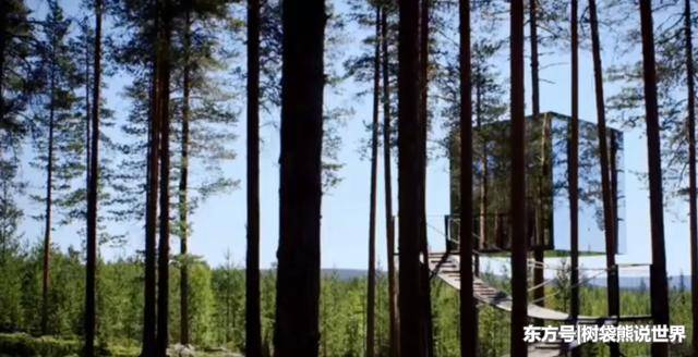 世界上最神奇的树屋:几乎看不到房屋,在森林中可以隐身!