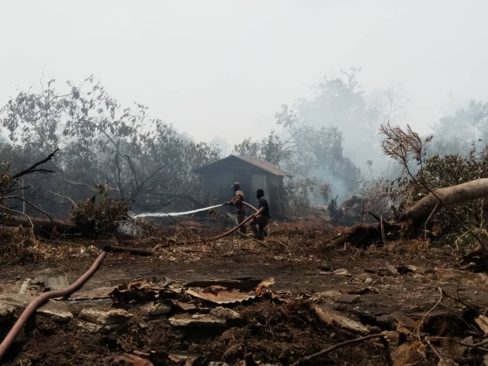 State governments, local authorities, land owners told to prevent forest fire