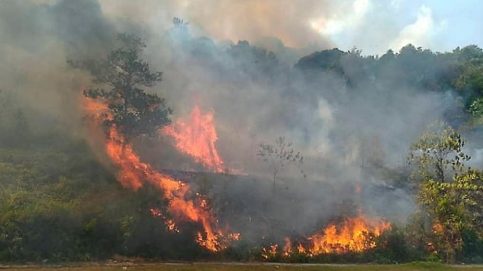 Forest fire in Iskandar Puteri spreads to 98 hectares