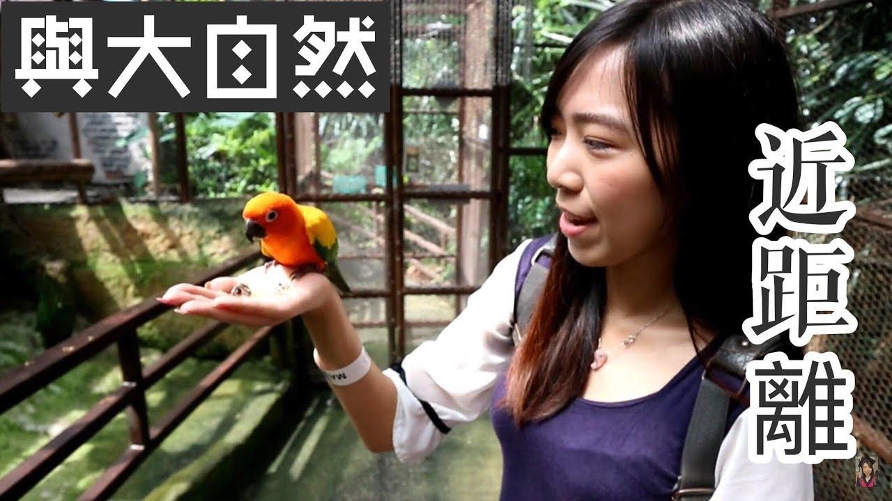 【马来西亚吉隆坡旅游】KL Forest Eco Park    Mini zoo KL Tower   迷你动物园   Cheryl谨荑