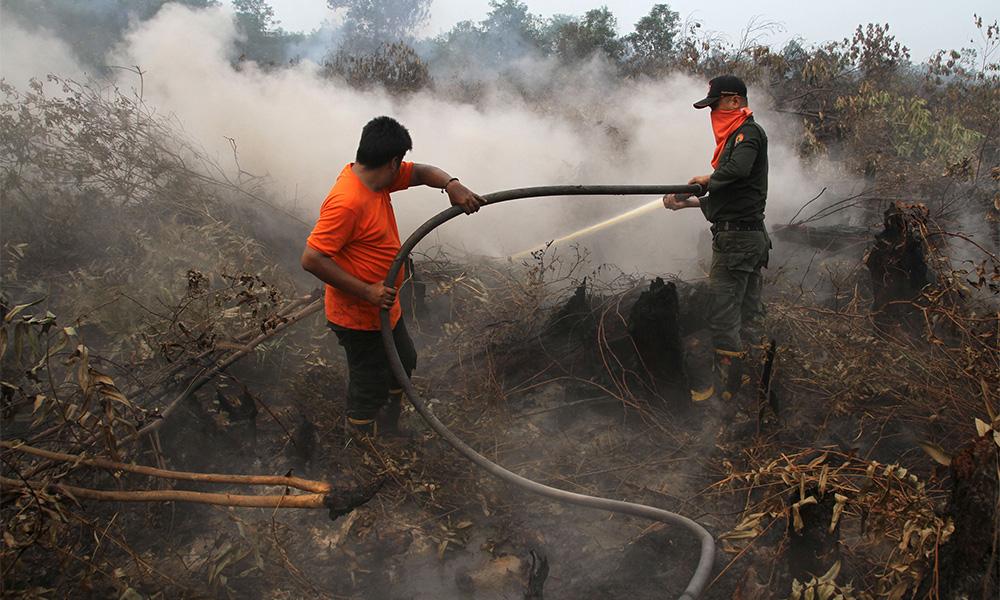 Forest fire in Iskandar Puteri spreads to 98ha